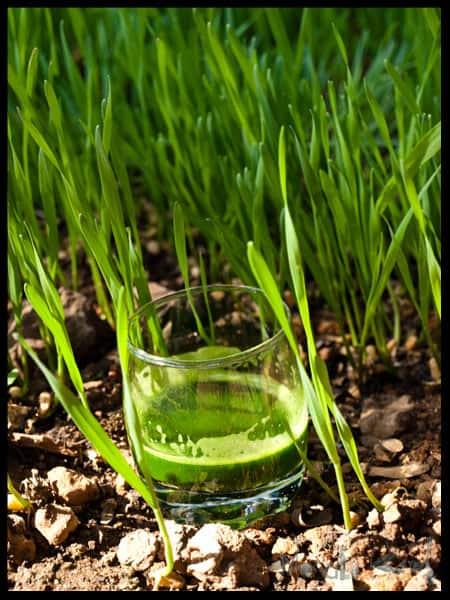 Wheatgrass Shot with wheatgrass in the background