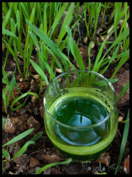 homemade Wheatgrass Shot