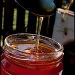 Dandelion jelly www.masalaherb.com