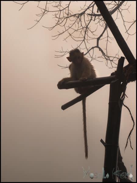 Amboli, Tilari - South Maharashtra #Westernghats #India #travel masalaherb.com