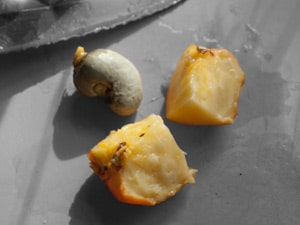How to roast Cashews – Traditional Goan roasting of raw Cashews – The Caju Fruit