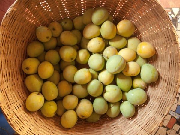 Homemade Mango Jam #stepbystep #recipe masalaherb.com