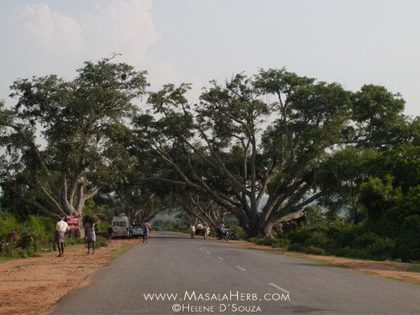 Useful road trip tips for India masalaherb.com