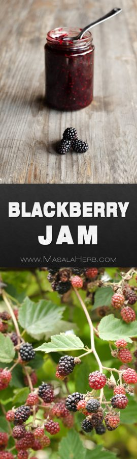 Blackberry Jam Recipe - How to make Blackberry Jam without pectin, season preserve, fruit jam, homemade DIY jam, no pectin and without artificial preservatives, easy french jam recipe with fresh blackberry fruits, summer jam, foraging, canning www.MasalaHerb.com #jam #blackberry #canning