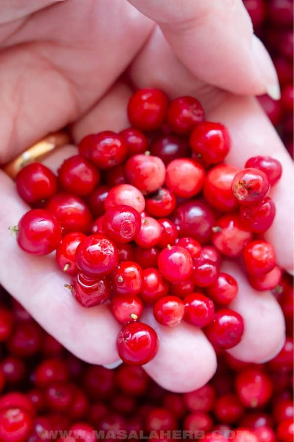 fresh handpicked lingonberries
