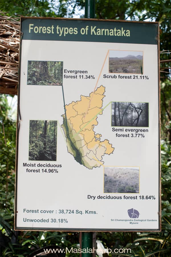 forest types in Karnataka state, south india www.masalaherb.com