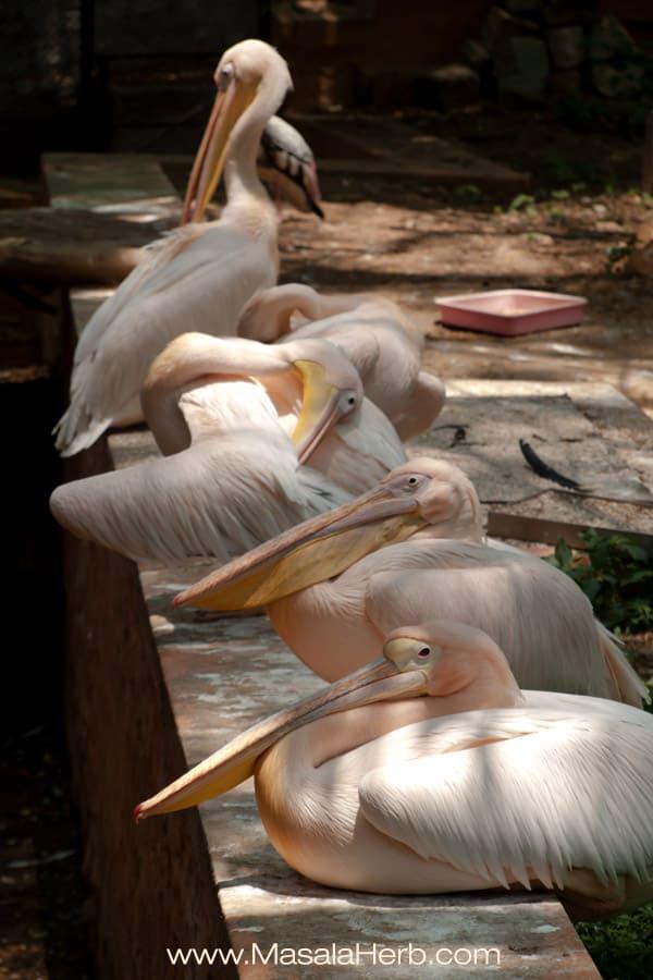 Zen birds Mysore zoo Karnataka South India trip www.masalaherb.com