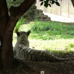Mysore trip and Mysore Zoo | Karnataka | South India