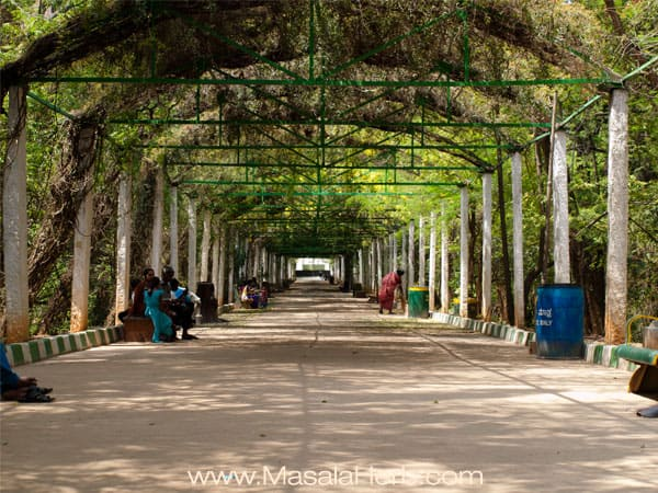 Mysore zoo Karnataka South India trip www.masalaherb.com
