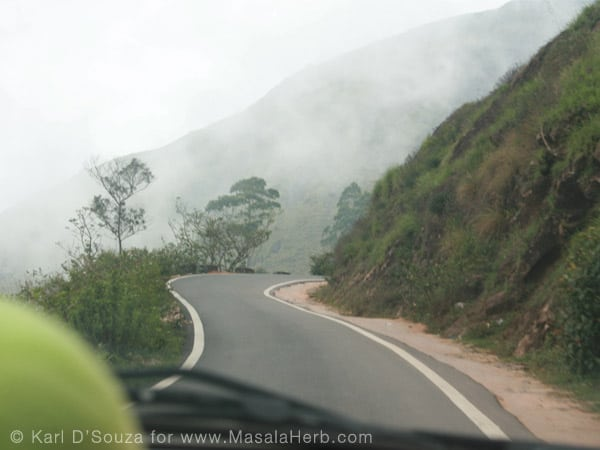 Traveling South India www.masalaherb.com mysty Western Ghat Mountain roads near Munnar tea plantation Kerala India