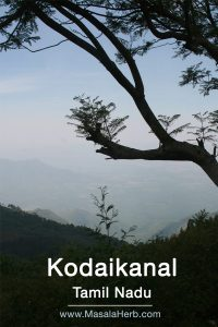 view from Kodaikanal into the valley south india www.masalaherb.com