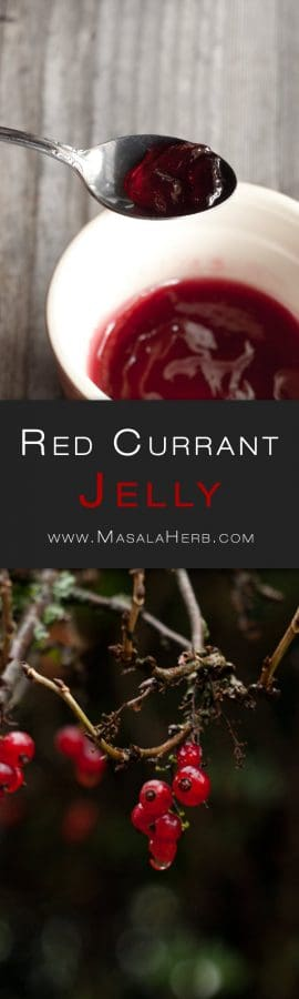 Easy Red Currant Jelly Recipe {no pectin} - How to make Red Currant Jelly Preserve + tips so that you can make your own easily at home with just 3 natural ingredients. Can be stored for months! www.MasalaHerb.com