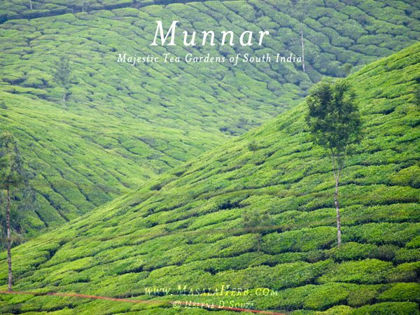 Munnar Hill Station Kerala - Majestic Tea Gardens of South India www.masalaherb.com #travel #India #Asia
