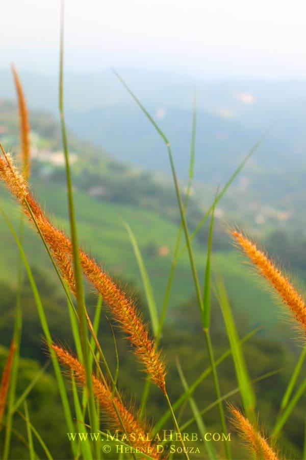 Munnar Hill Station Kerala - Majestic Tea Gardens of South India www.masalaherb.com #travel #India #Asia
