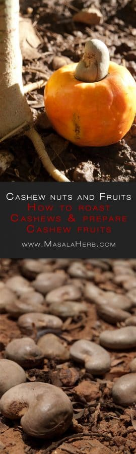 How to roast Cashews - Traditional Goan roasting of raw Cashews - The Caju Fruit instructions www.MasalaHerb.com