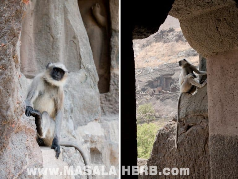 Blackface Monkeys Ajanta Caves - The Lost World - Breathtaking Ancient Indian Paintings & Sculptures www.MasalaHerb.com