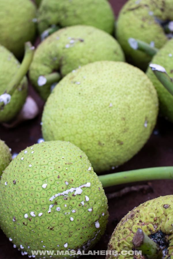 Breadfruits - Tropical Fruits you didn't know existed!