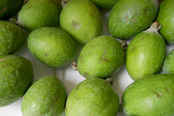 Feijoa - Tropical Fruits you didn't know existed!