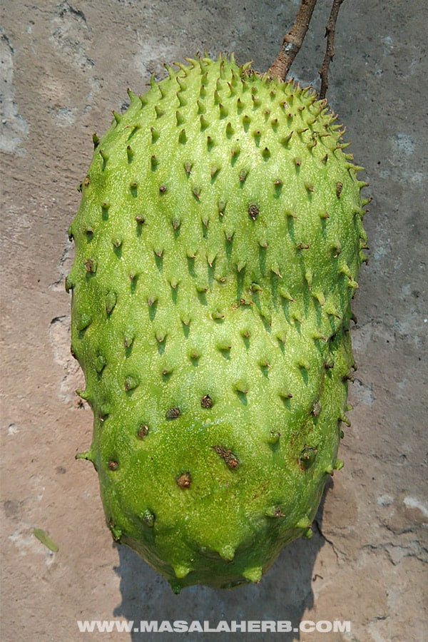 Soursop - Tropical Fruits you didn't know existed! [List and pictures]