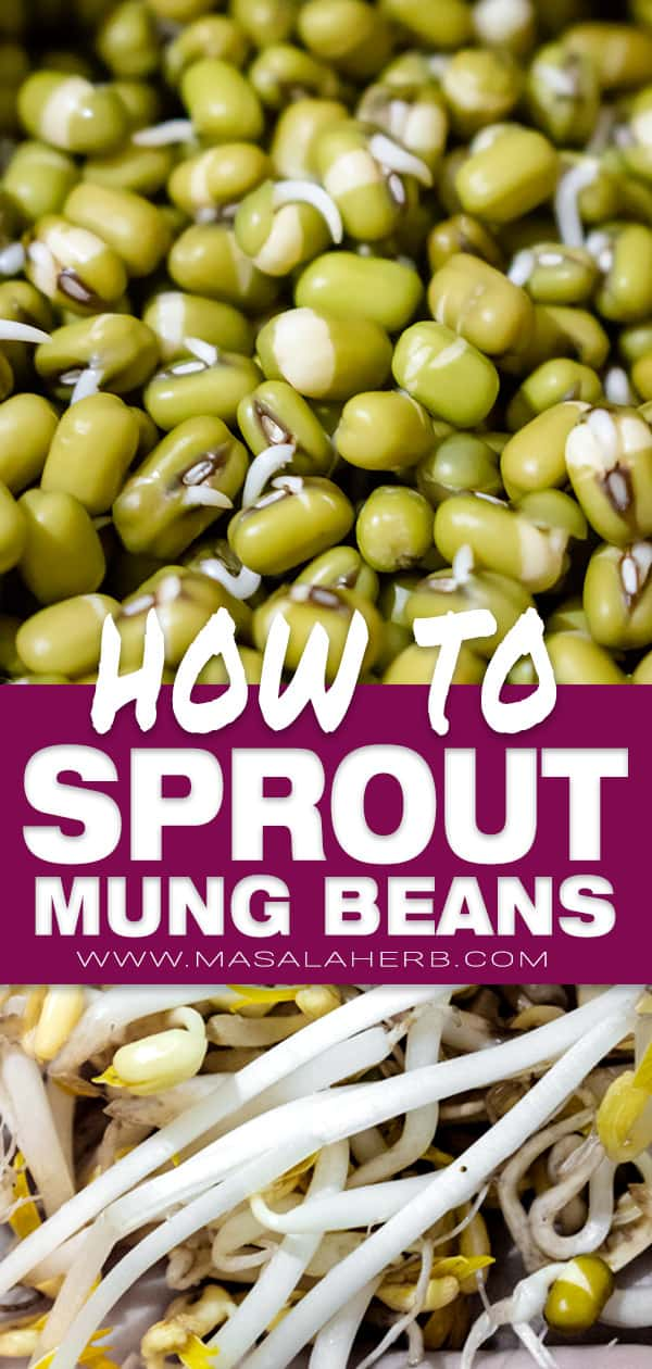 How to sprout mung beans - DIY Mung Bean Sprouts