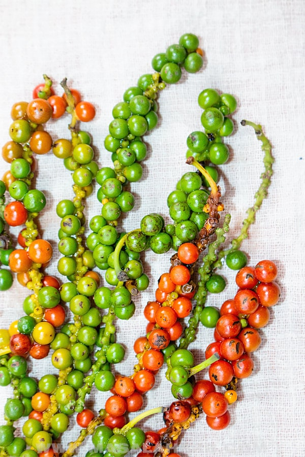 Green Peppercorns and red ripe Peppercorns on drupes
