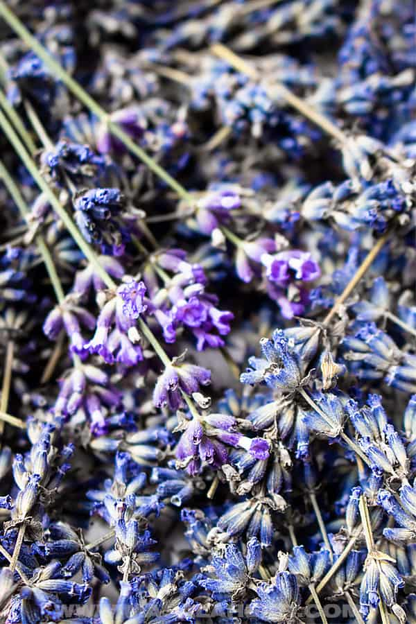 Fresh and dried lavender flower buds