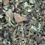dried herbs close up