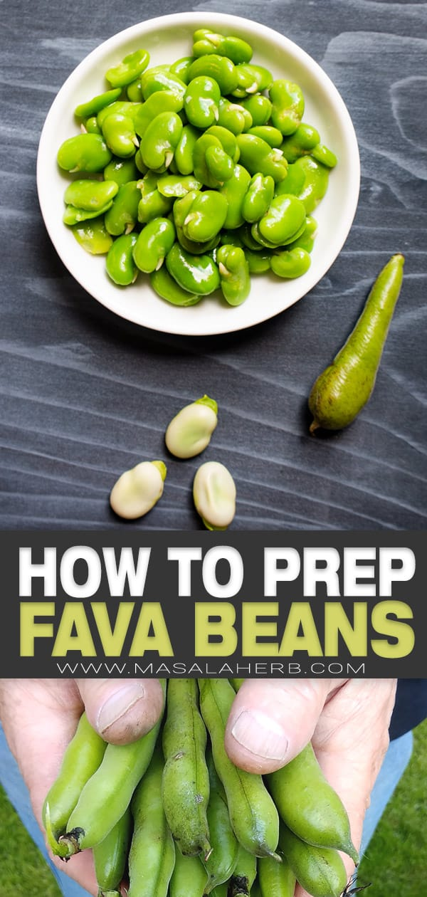 how to prep fava beans pin image
