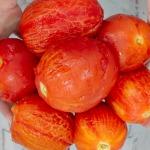 peeled tomatoes image