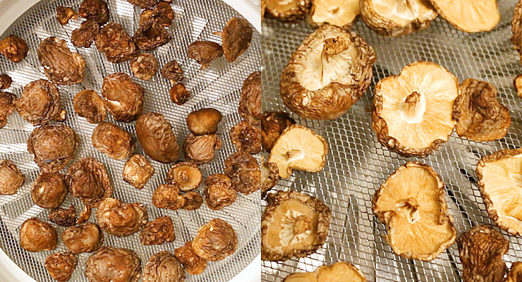 dry mushrooms on dehydrator trays