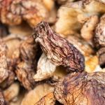 close up dehydrated mushrooms