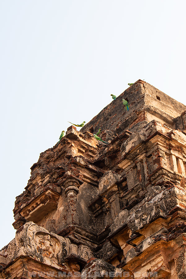 parrots sitting on temple walls